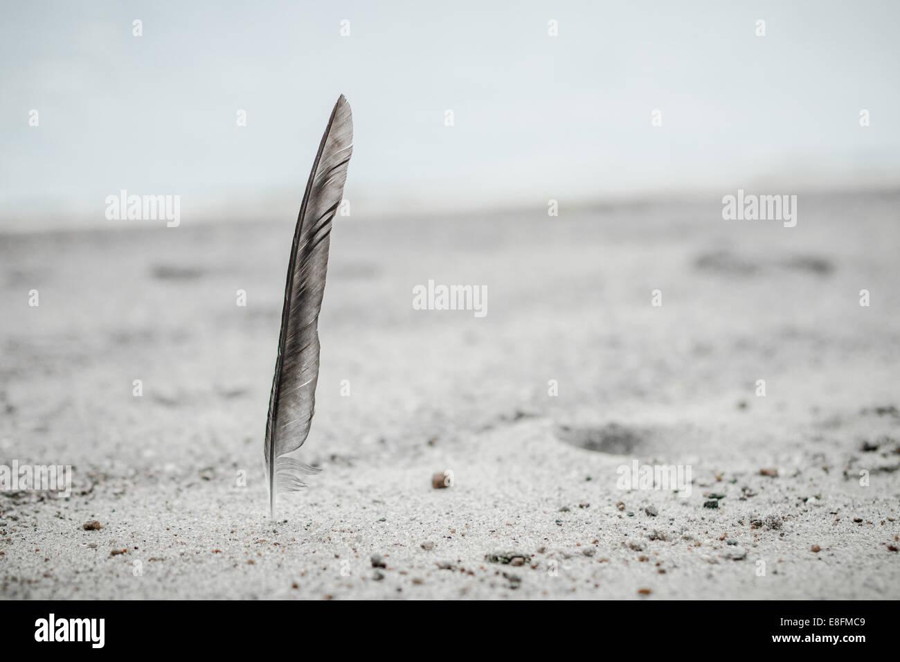 Norwegen, Feder am Strand gefunden Stockbild