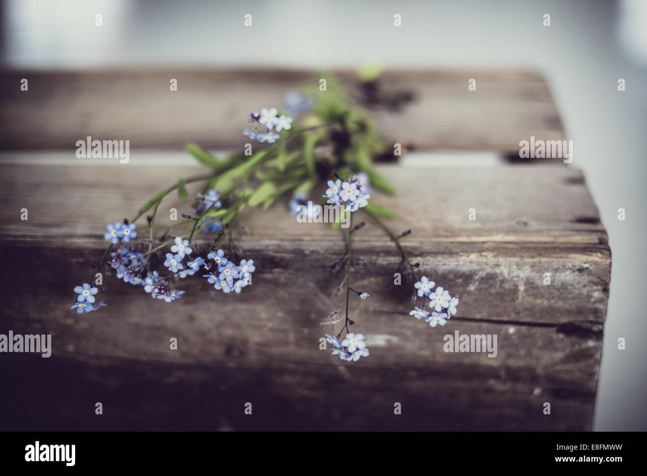 Vergissmeinnicht Blumen auf alte Holzkiste Stockbild