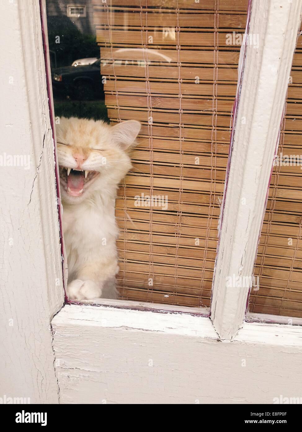 Katze aus Fenster Stockbild