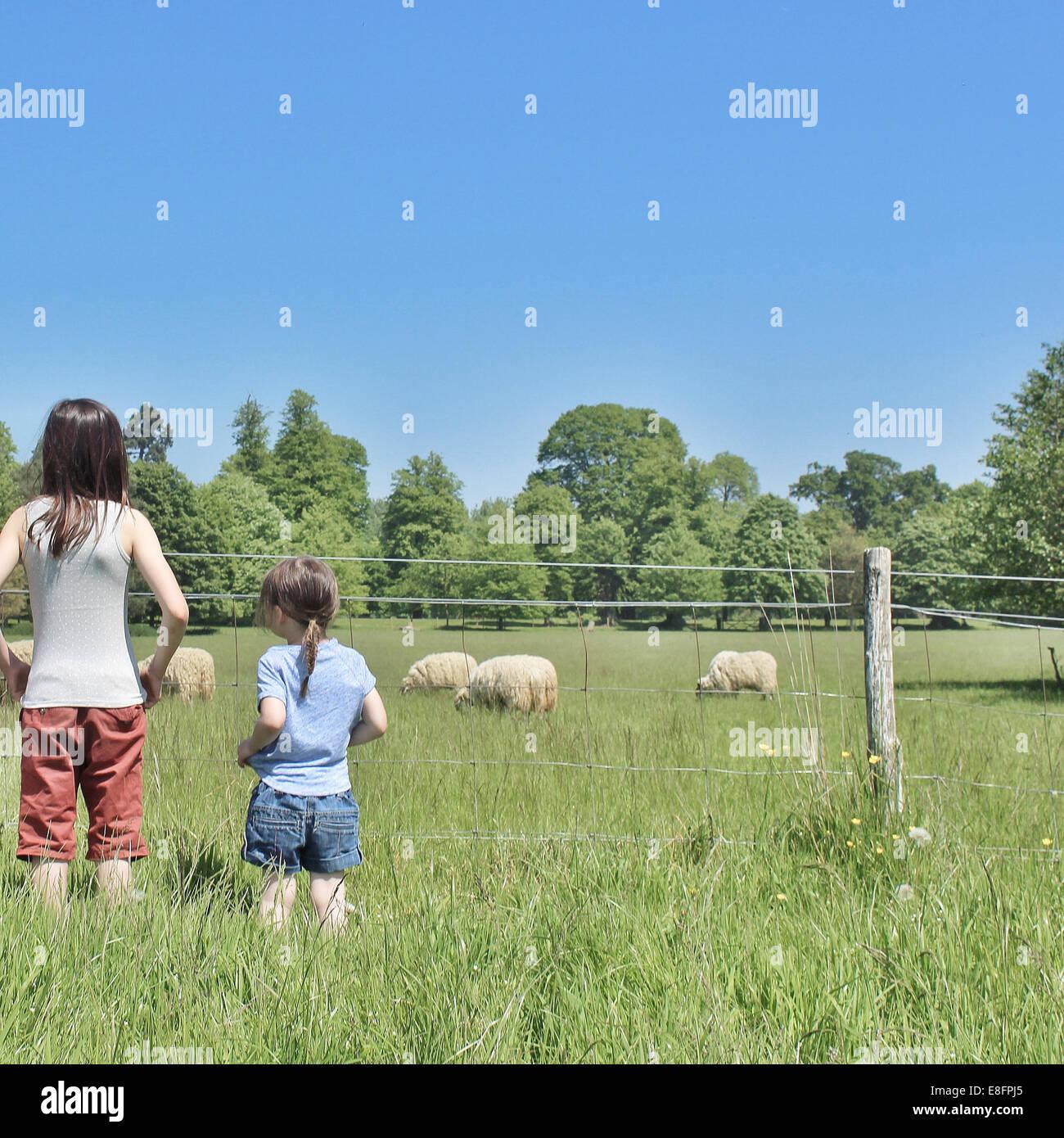 Zwei Mädchen auf der Suche bei Schafen in einem Feld Stockbild
