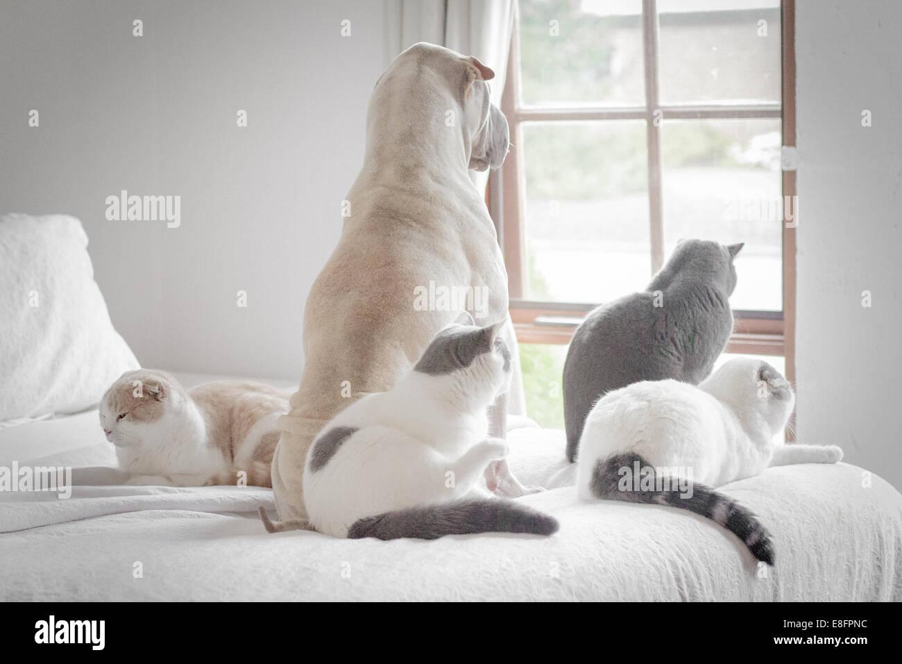 Hund und vier Katzen Blick aus Fenster Stockbild