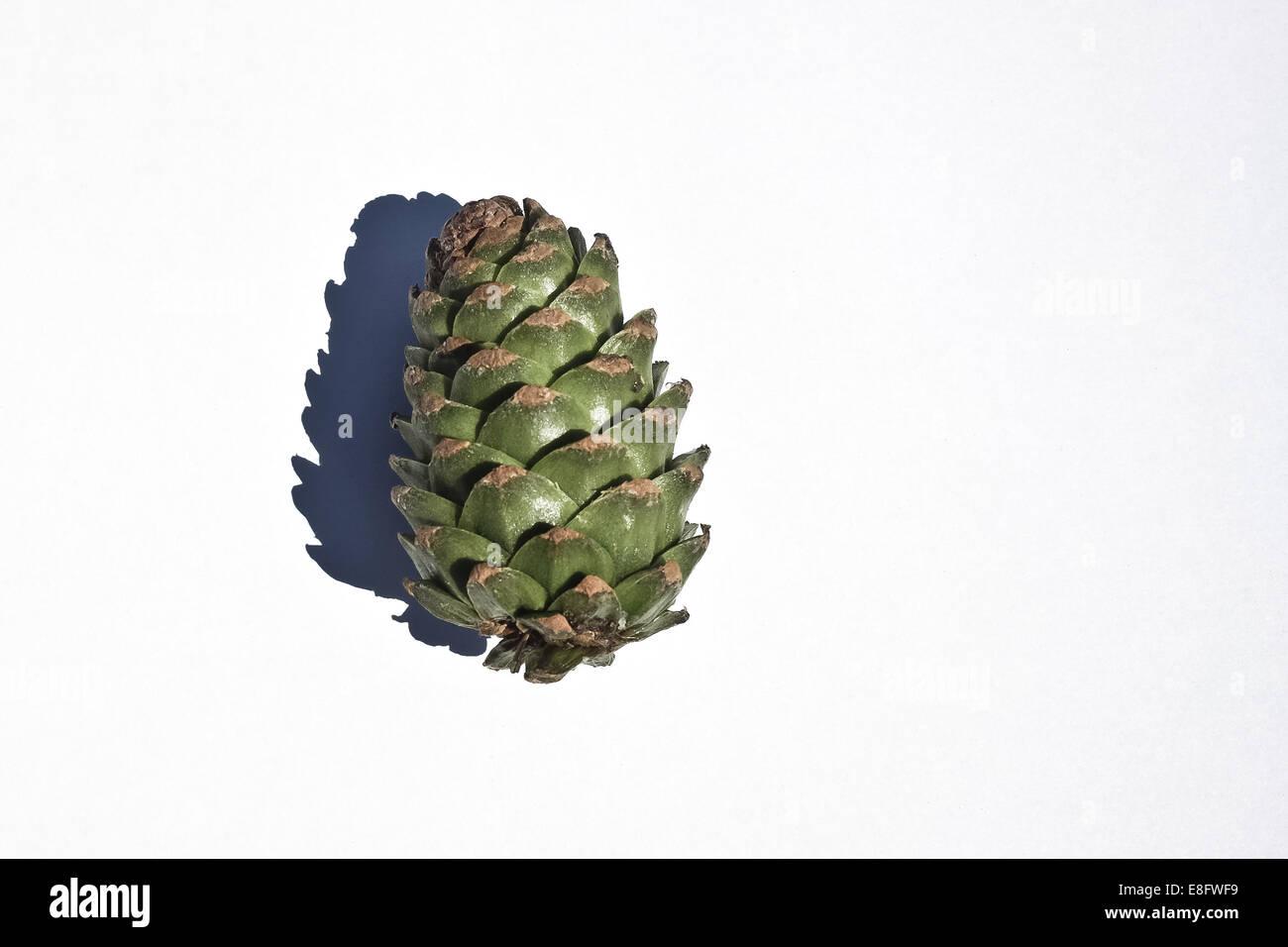 Tannenzapfen auf weißen Hintergrund Stockbild