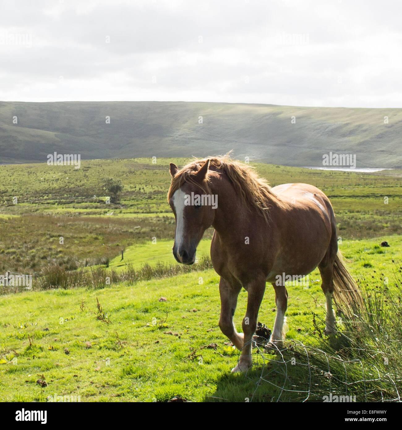 Pferd in Landschaft Stockbild