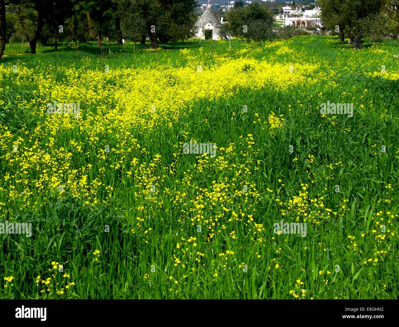 Italien, Bild des Frühlings Stockbild