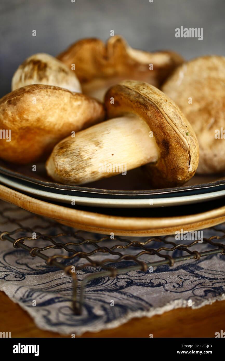 Rohe Pilze auf einem Teller Stockbild