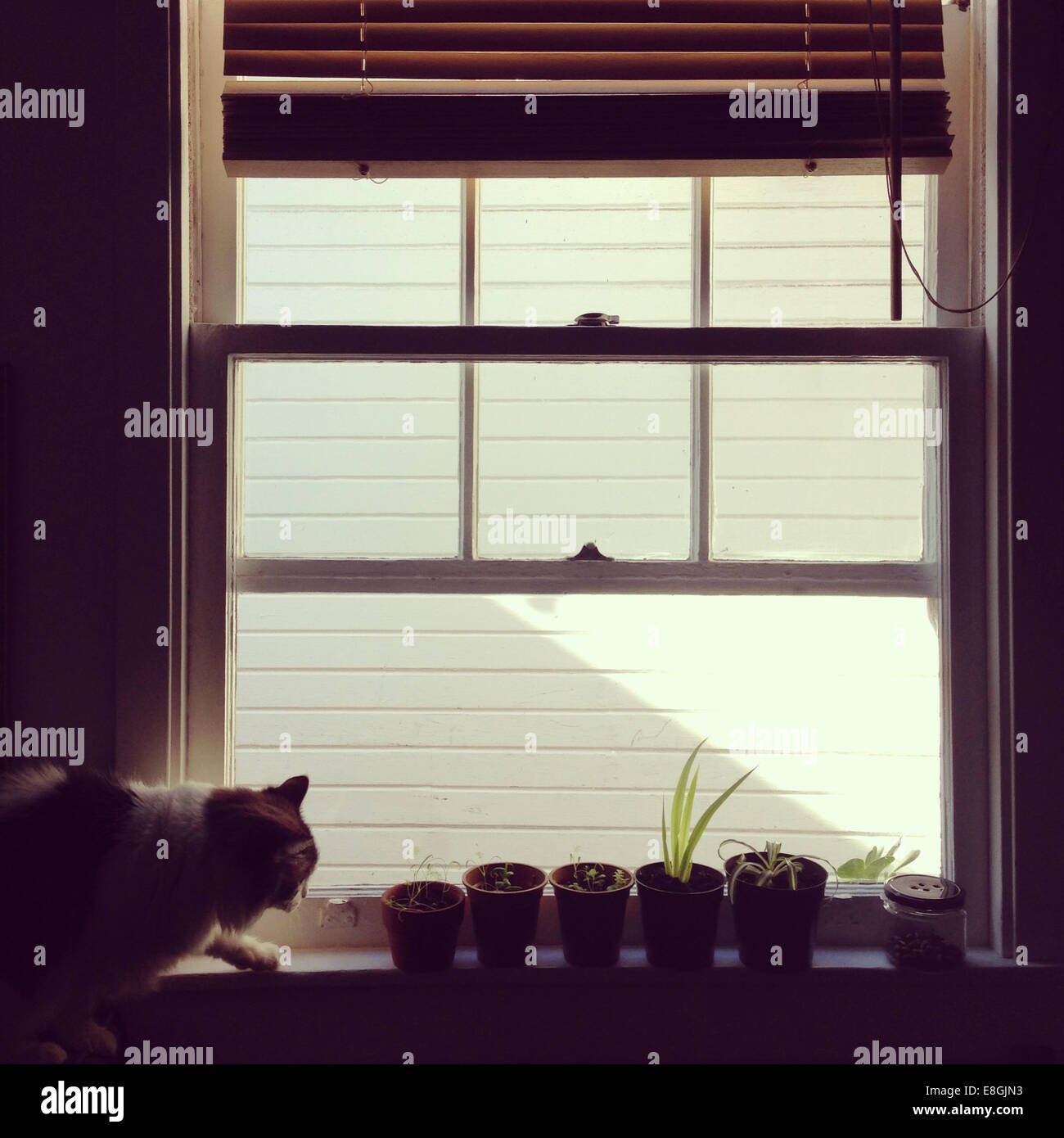 Katze auf der Fensterbank mit Pflanzkübel Stockbild