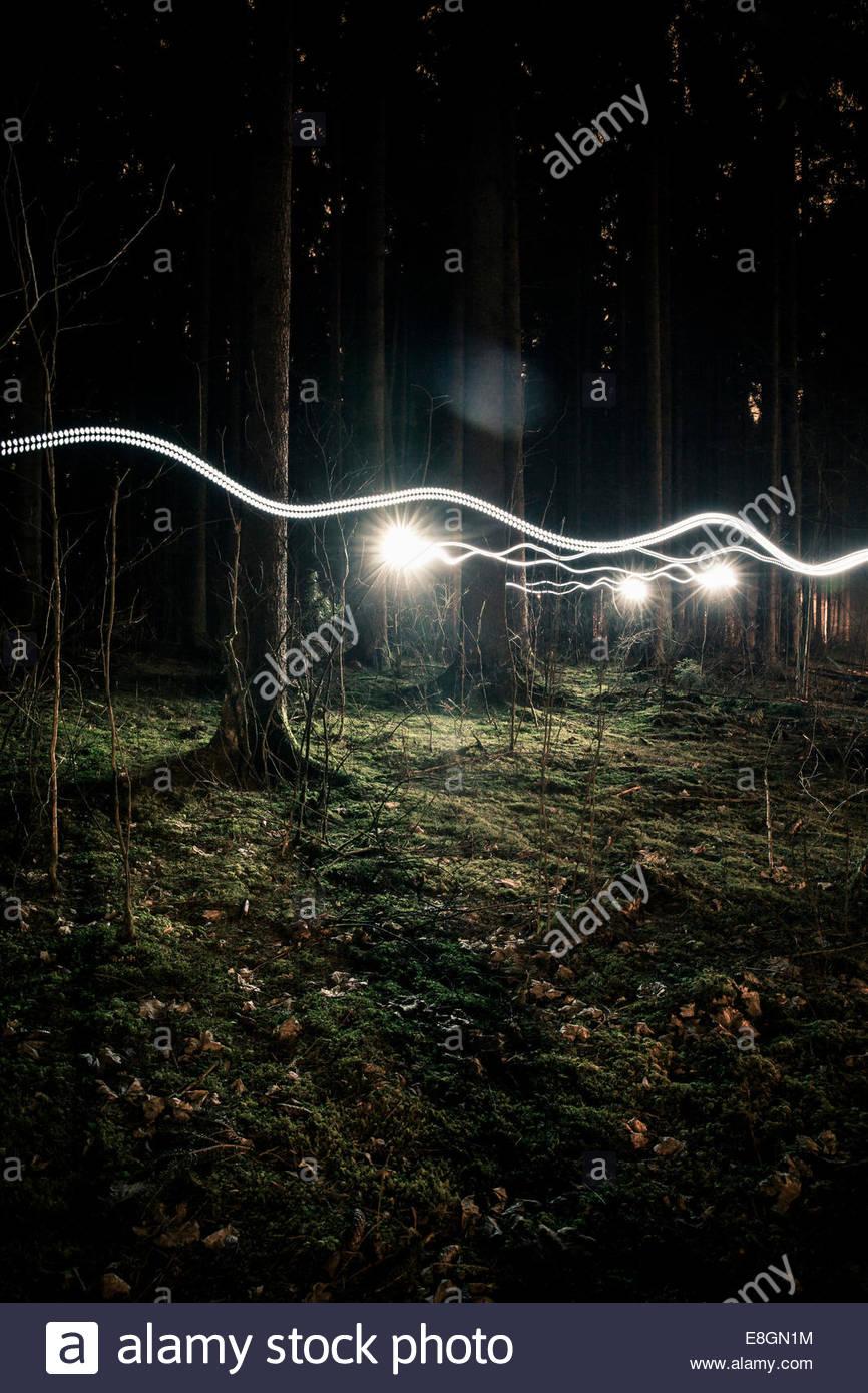 Leichte Wanderwege im Wald Stockbild