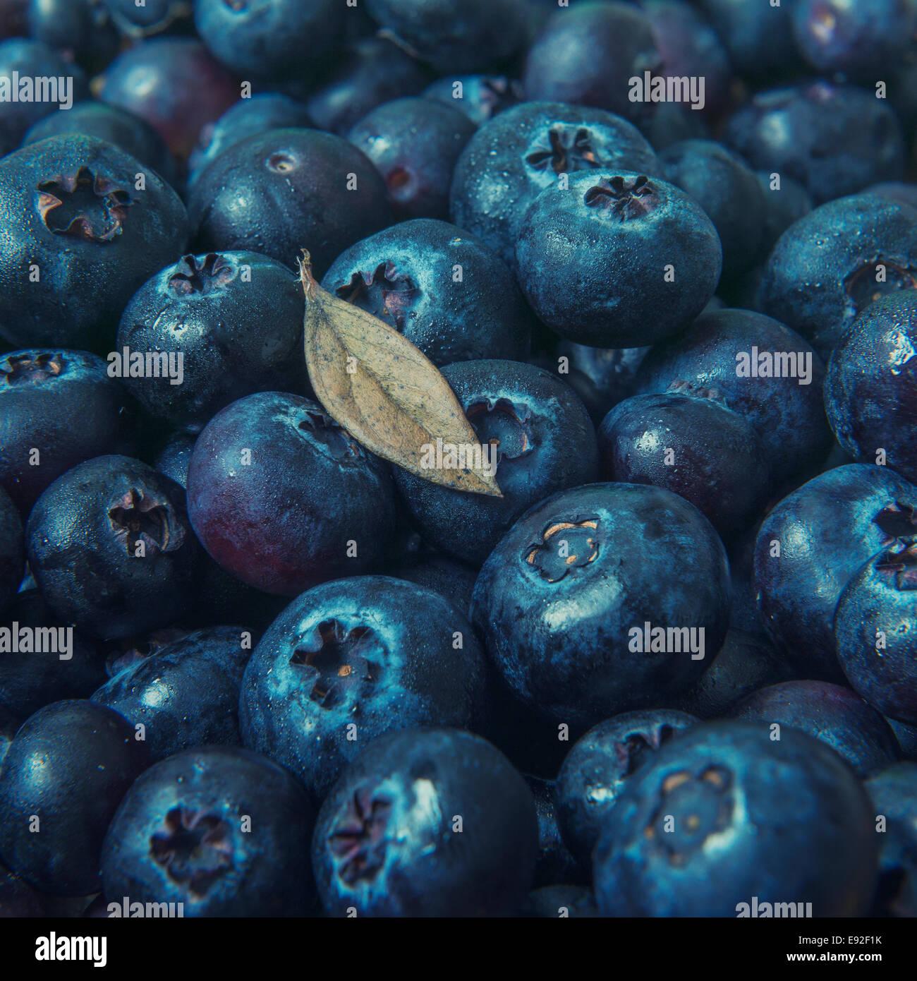 Frische Heidelbeeren mit Blatt Stockbild