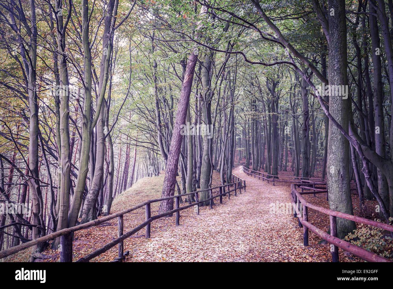Retro-gefilterte Bild eines Waldes. Stockbild