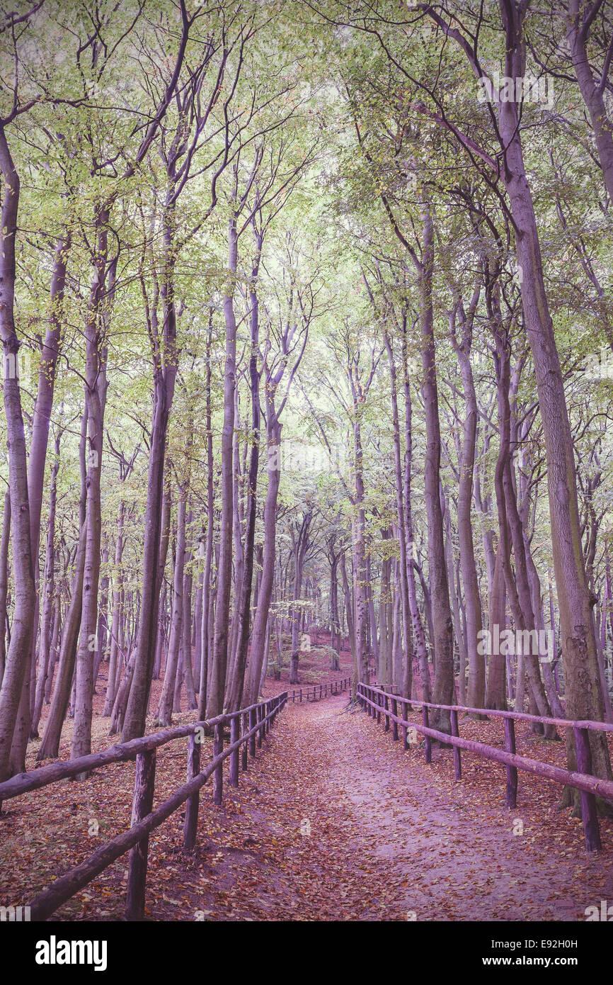 Retro Vintage gefilterte Bild des hölzernen Pfad im Wald. Stockbild
