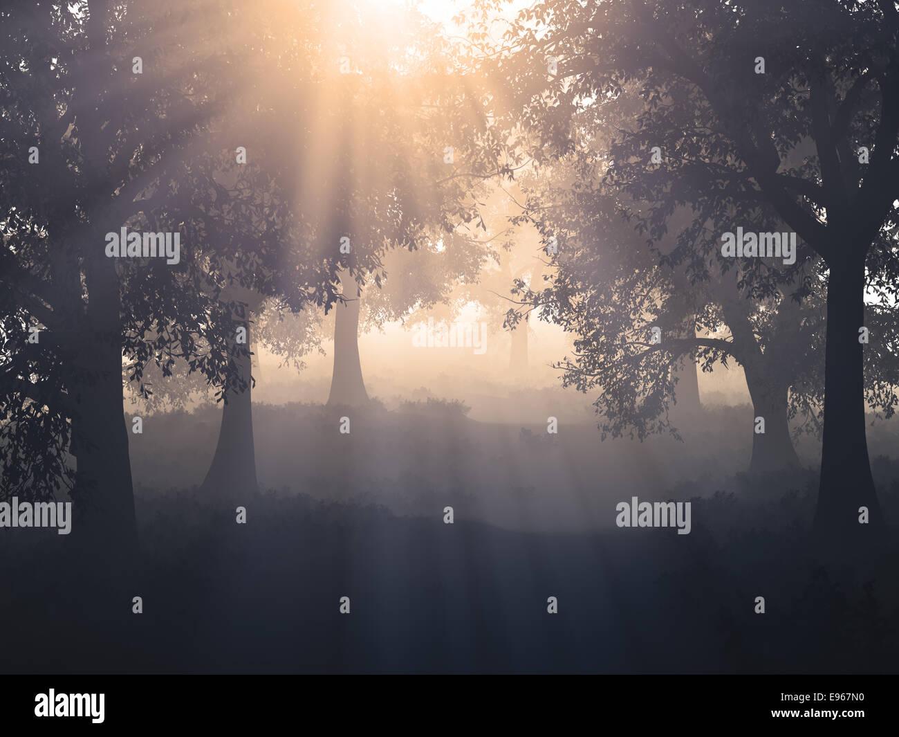 Sonnenschein im Mysty Wald Stockbild