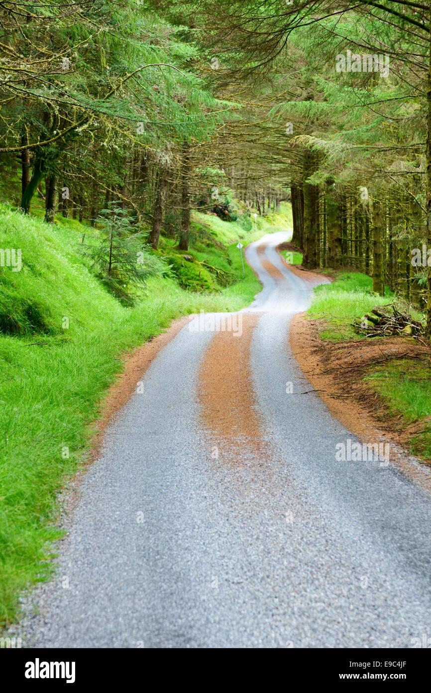 Kurvenreiche Panoramastraße durch den grünen Wald in Schottland Stockbild