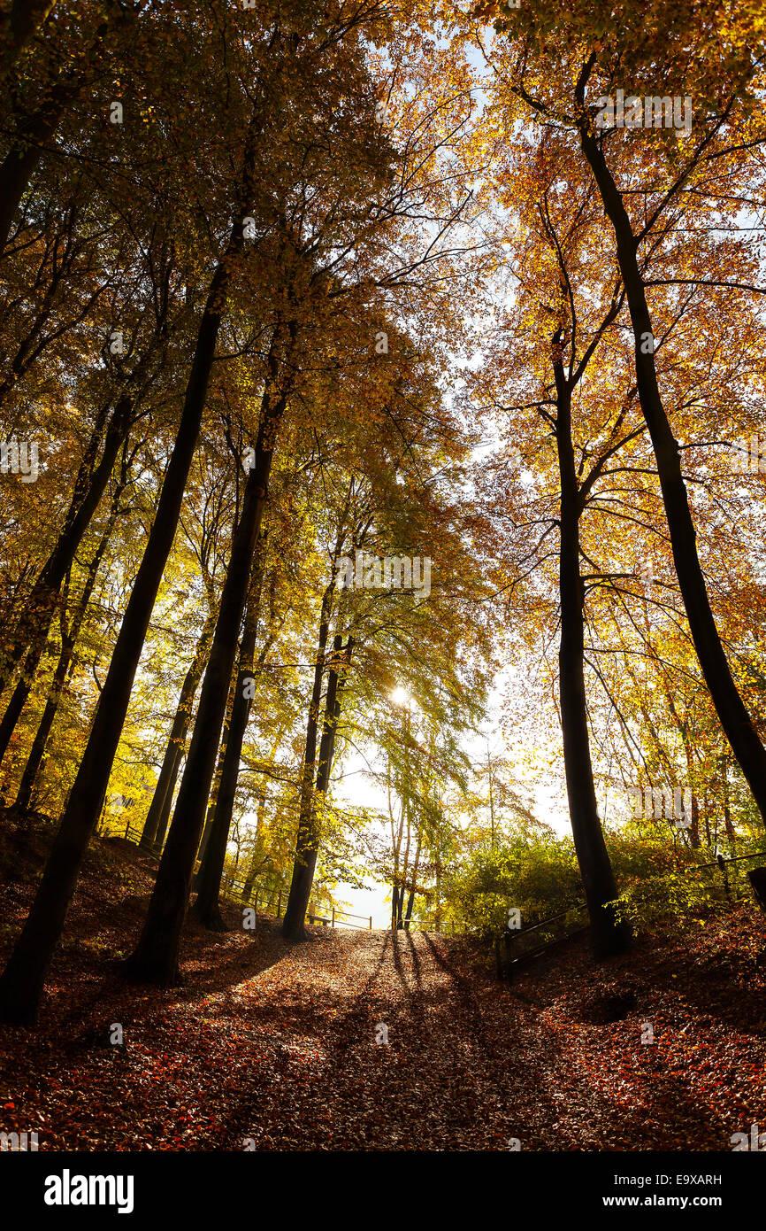 Geheimnisvolle dunkle Wald Herbstlandschaft. Stockbild