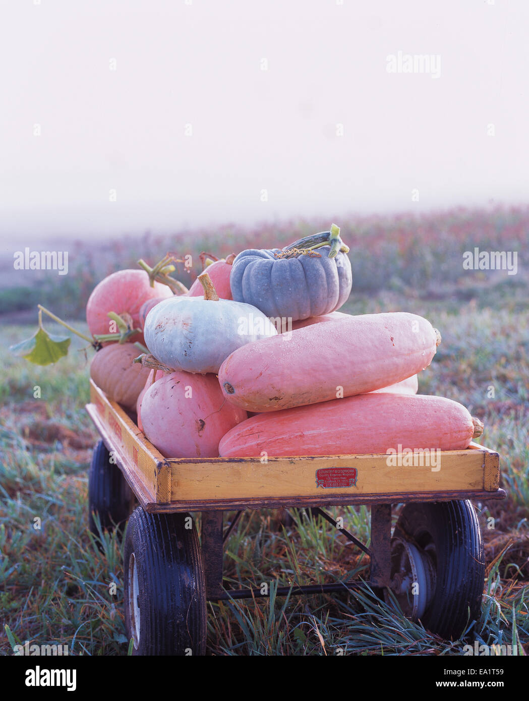 Kürbisse und Kalebassen in Wagen Stockbild