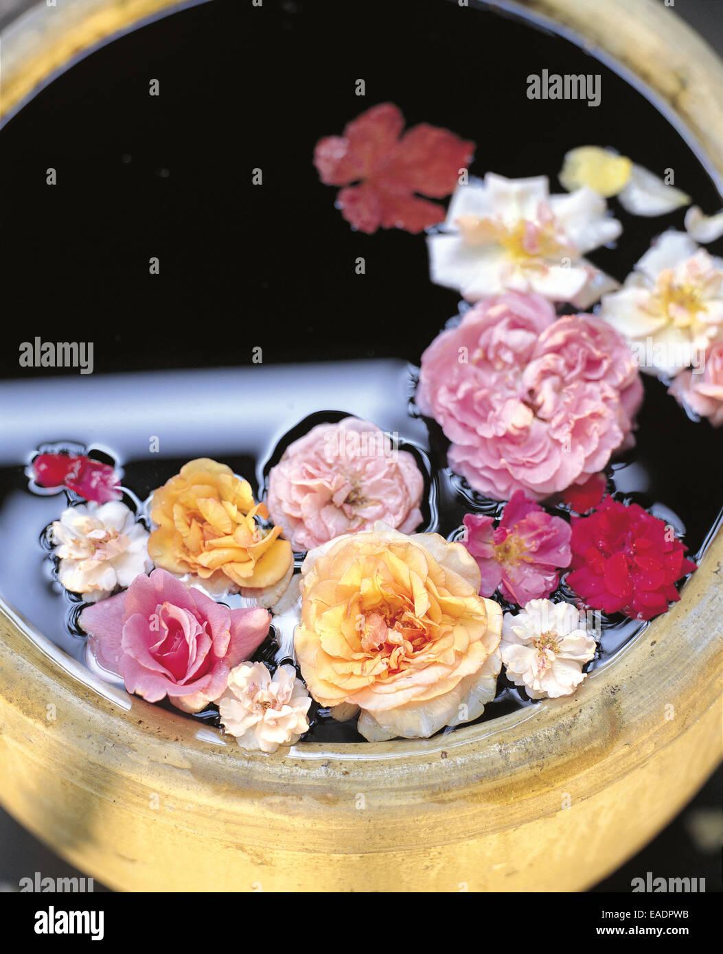 verschiedene Rosen in Keramik Fass Stockbild