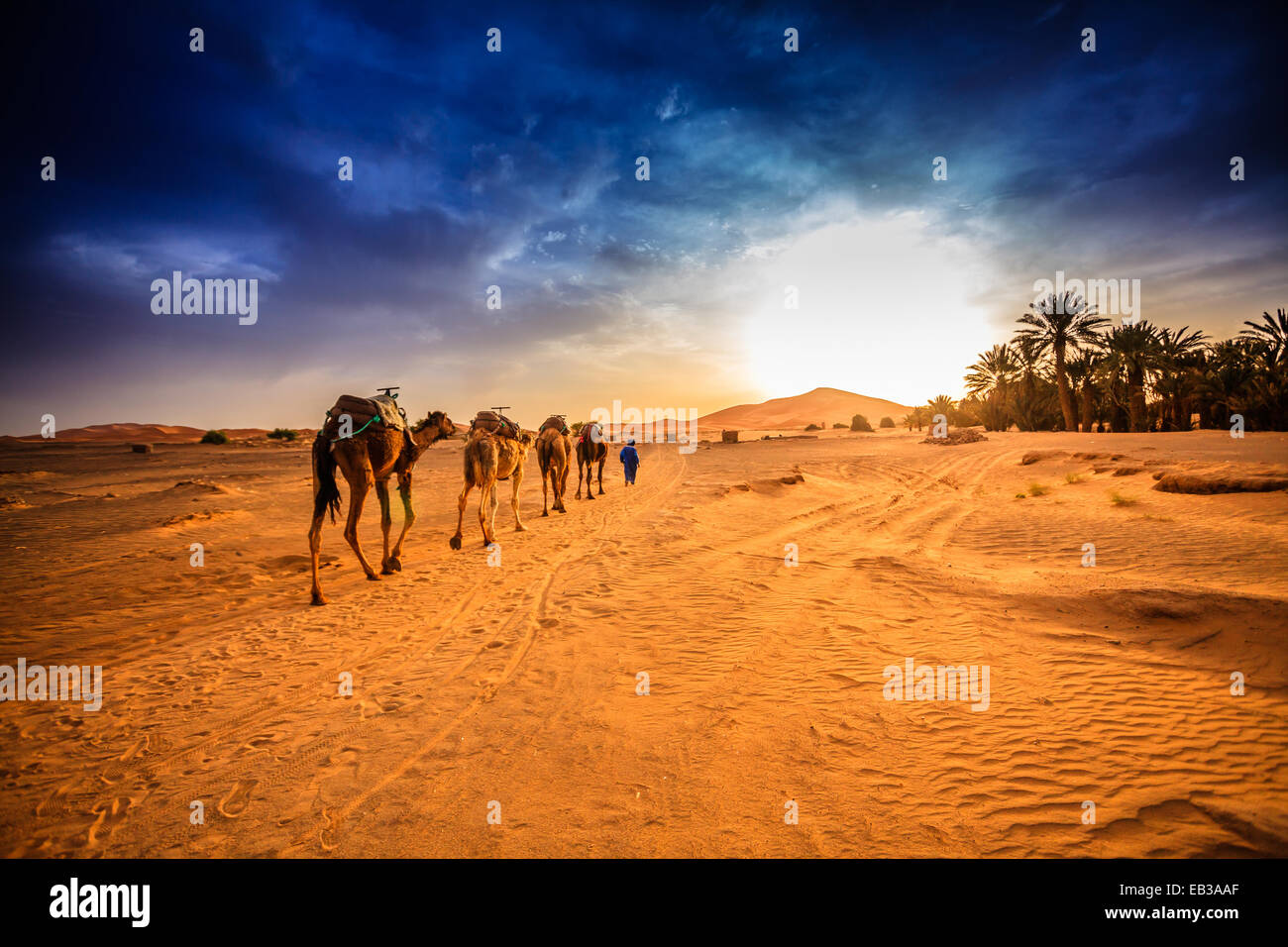 Kamel-Karawane in der Wüste Sahara, Marokko Stockbild