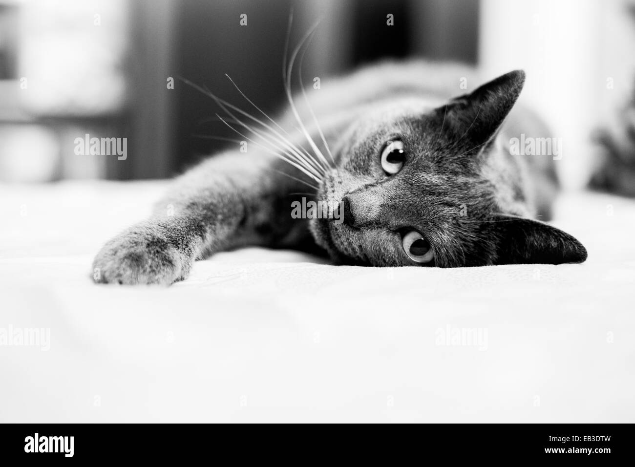 Cat Stockfotos Cat Bilder Alamy