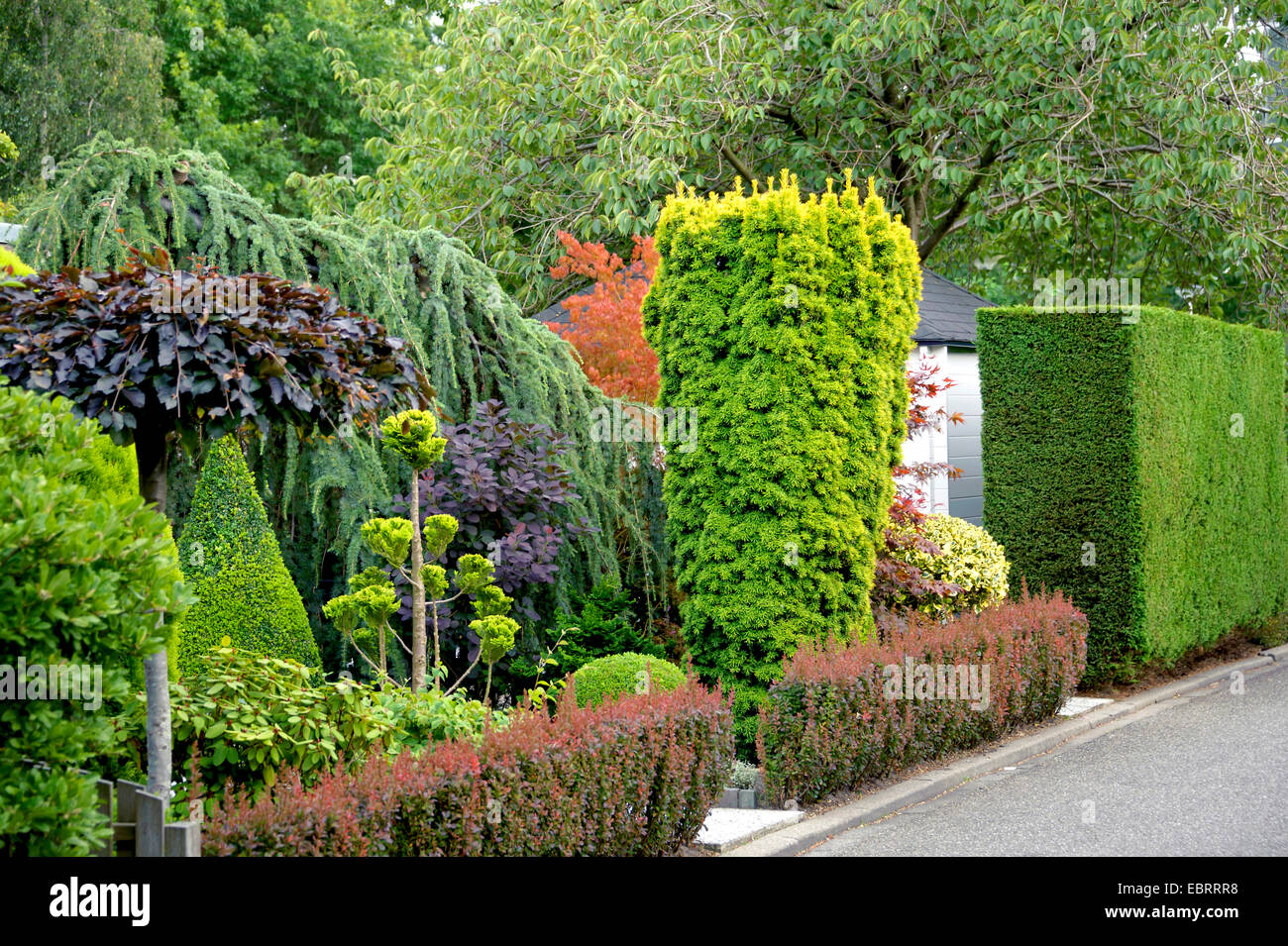 berberis hedge stockfotos berberis hedge bilder alamy. Black Bedroom Furniture Sets. Home Design Ideas