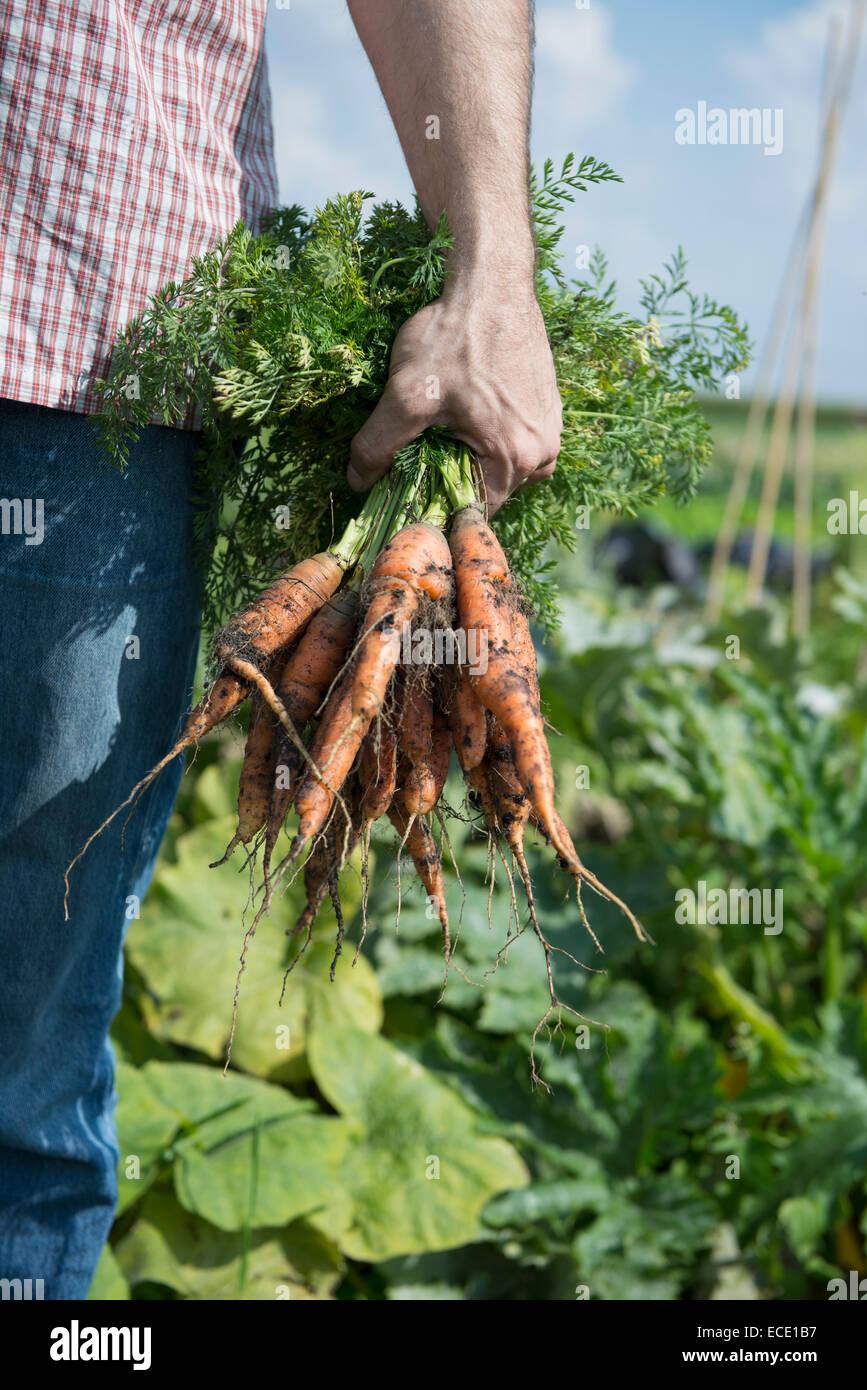 Selbstversorgung mit eigenen Gemüseanbau Stockbild