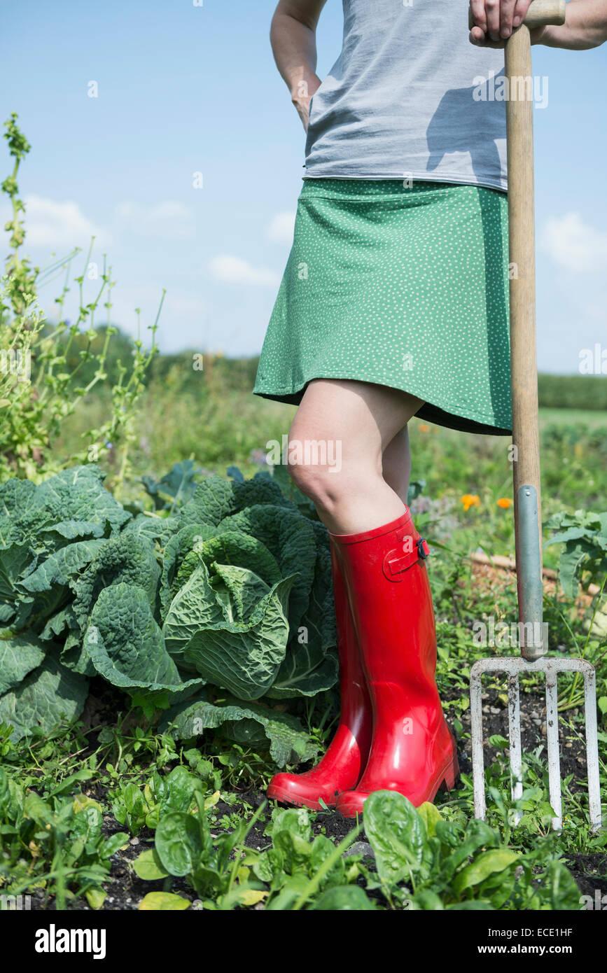 Frau Garten Zuteilung Kohl Pflanzen Stockbild