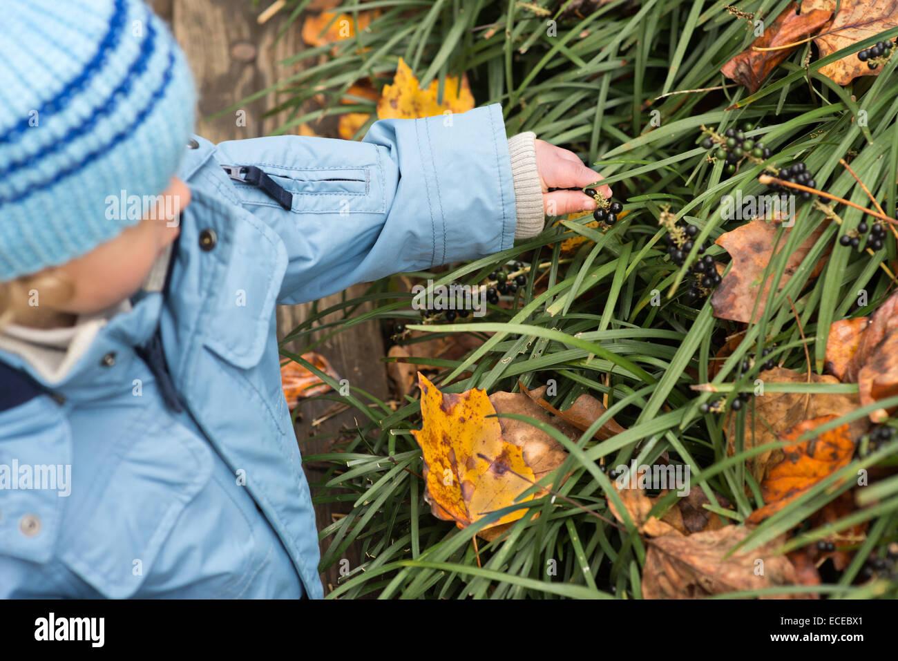 Kleine boy(2-3) Beeren pflücken Stockbild