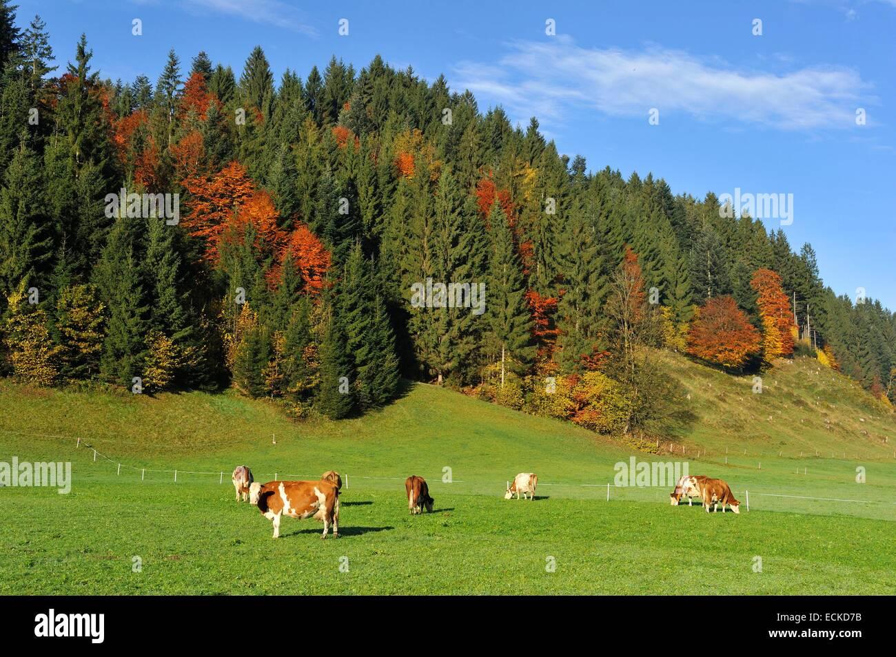 Österreich, Tirol, Oberndorf Im Tirol, Alpine Landschaft Stockbild