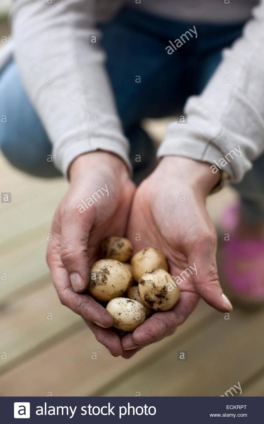 Bild der Mann, der frisch geerntete Kartoffeln am Hof hält beschnitten Stockbild