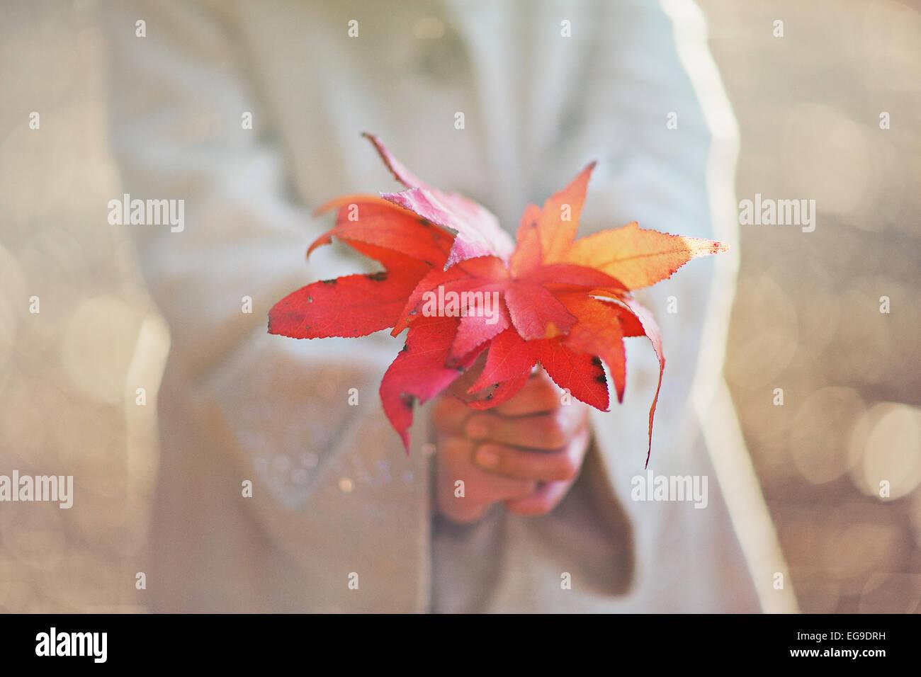 Mädchen halten fallen Blätter Stockbild