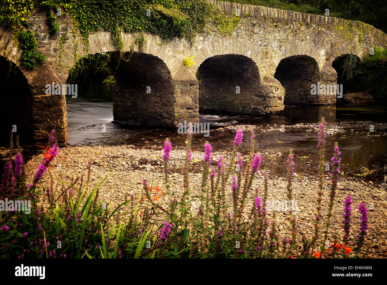Brücke über den Gearhmeen River mit Wildblumen, Nationalpark Killarney, Irland Stockbild