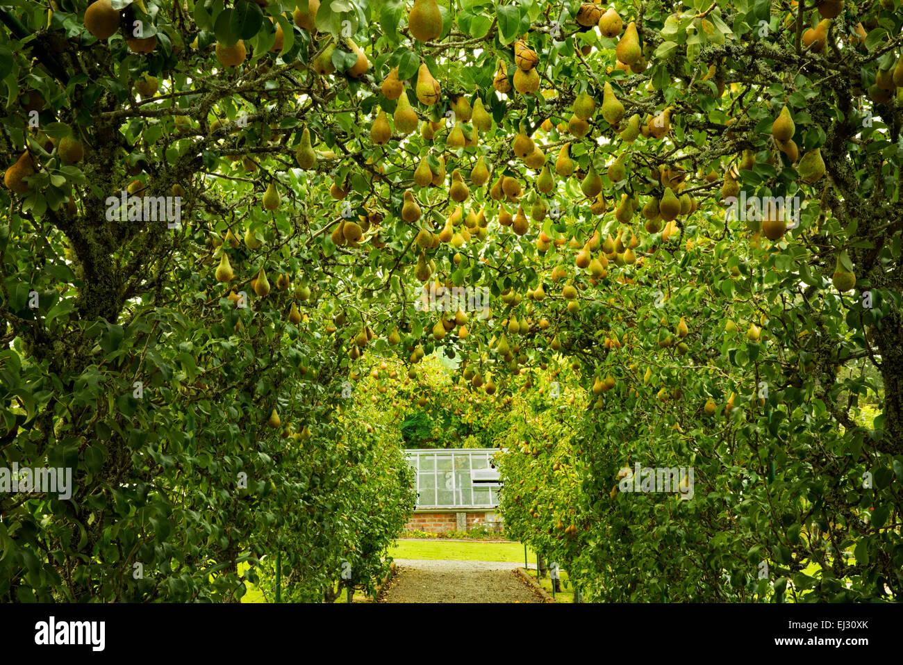 Birne Arbor und Weg in den Gärten an der Dromoland Castle, Irland Stockbild