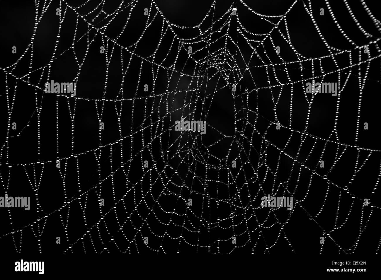 Ein Spinnennetz in der Morgensonne mit Wassertropfen, so dass eine Muster Stockbild