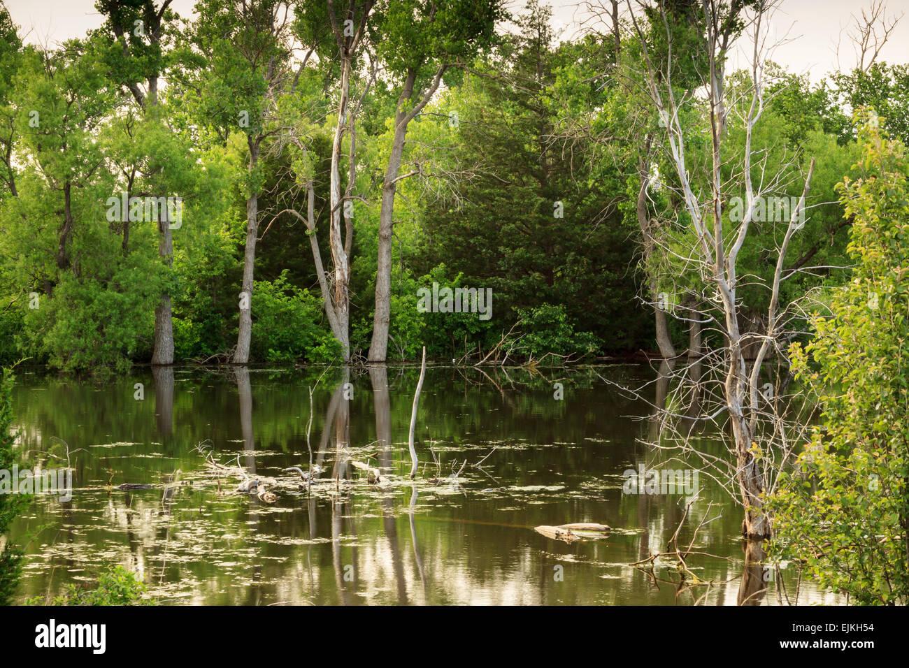 Ein kleiner Teich, umgeben von dicken grünen Laub im ländlichen Oklahoma City, Stockbild