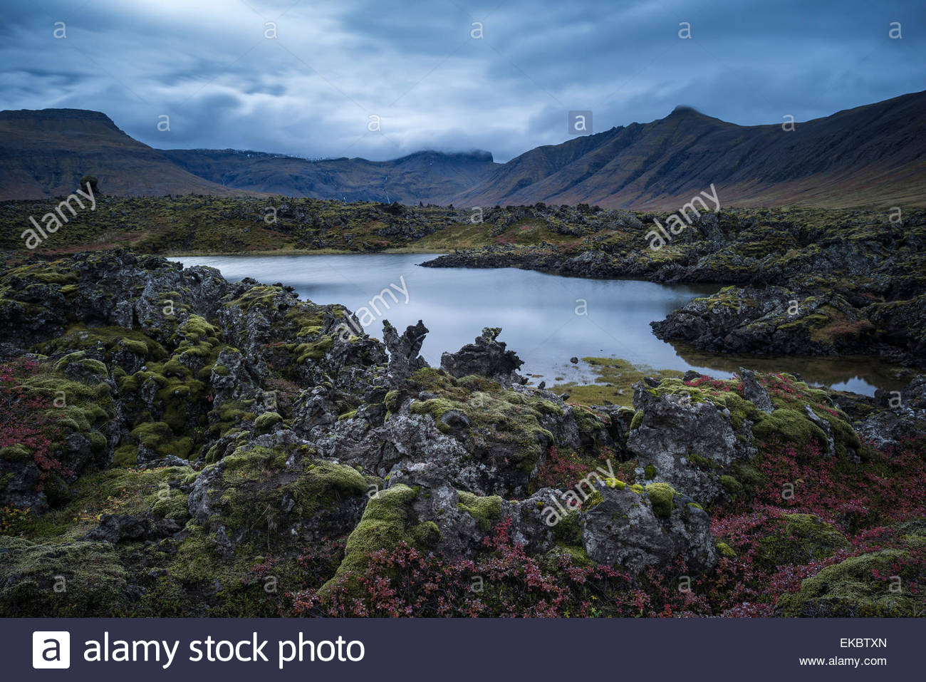 Teich im Lavafeld, Snaefellsnes Halbinsel, Island Stockbild