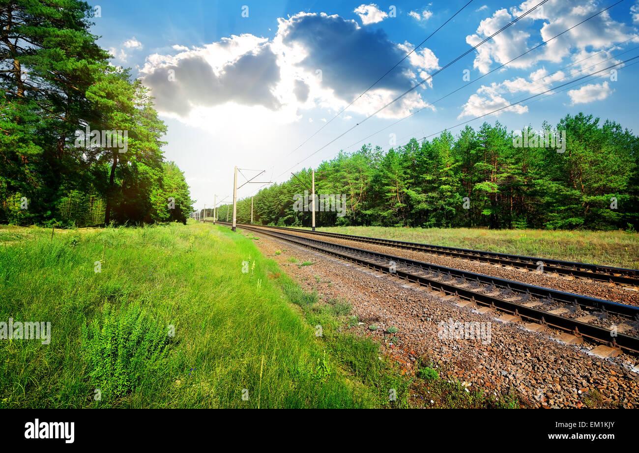 Eisenbahn durch den Pinienwald am sonnigen Tag Stockbild
