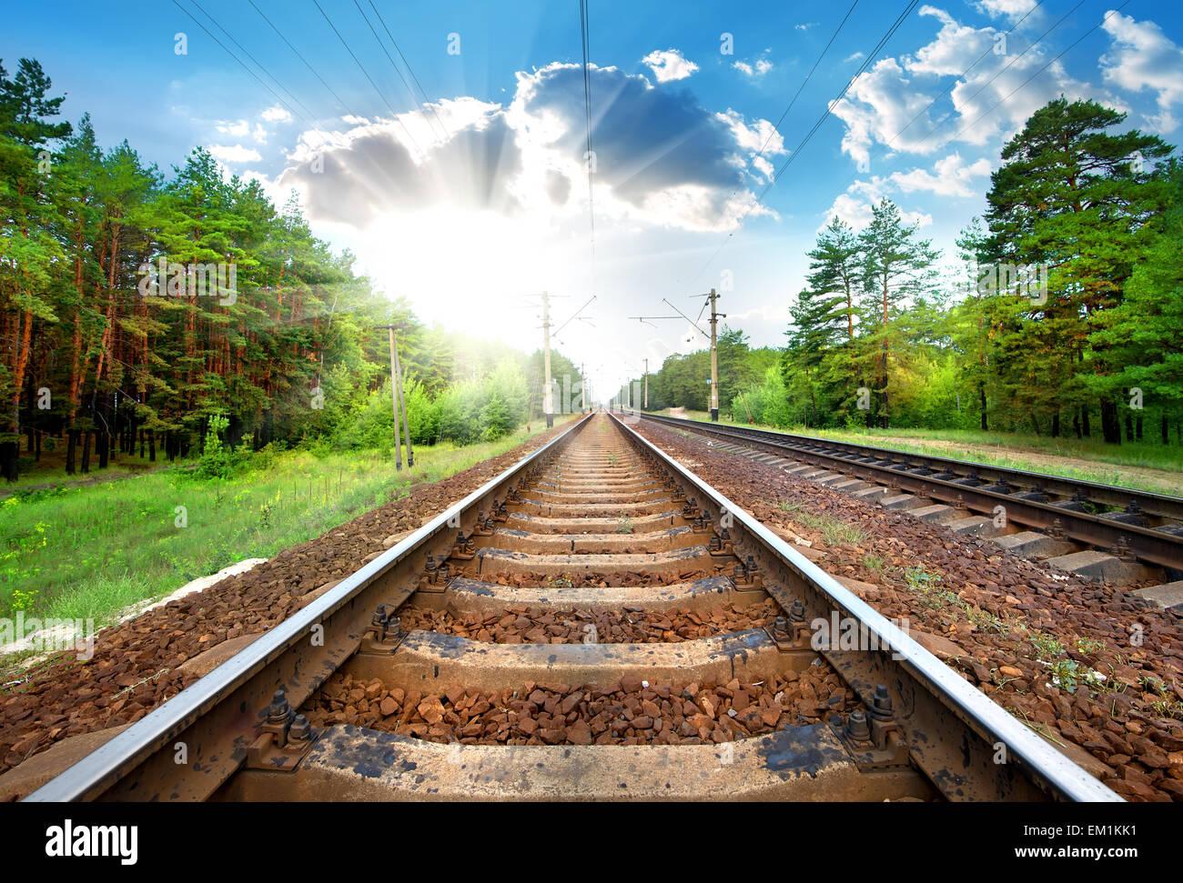 Eisenbahn durch die grünen Pinien Wald Nahaufnahme Stockbild