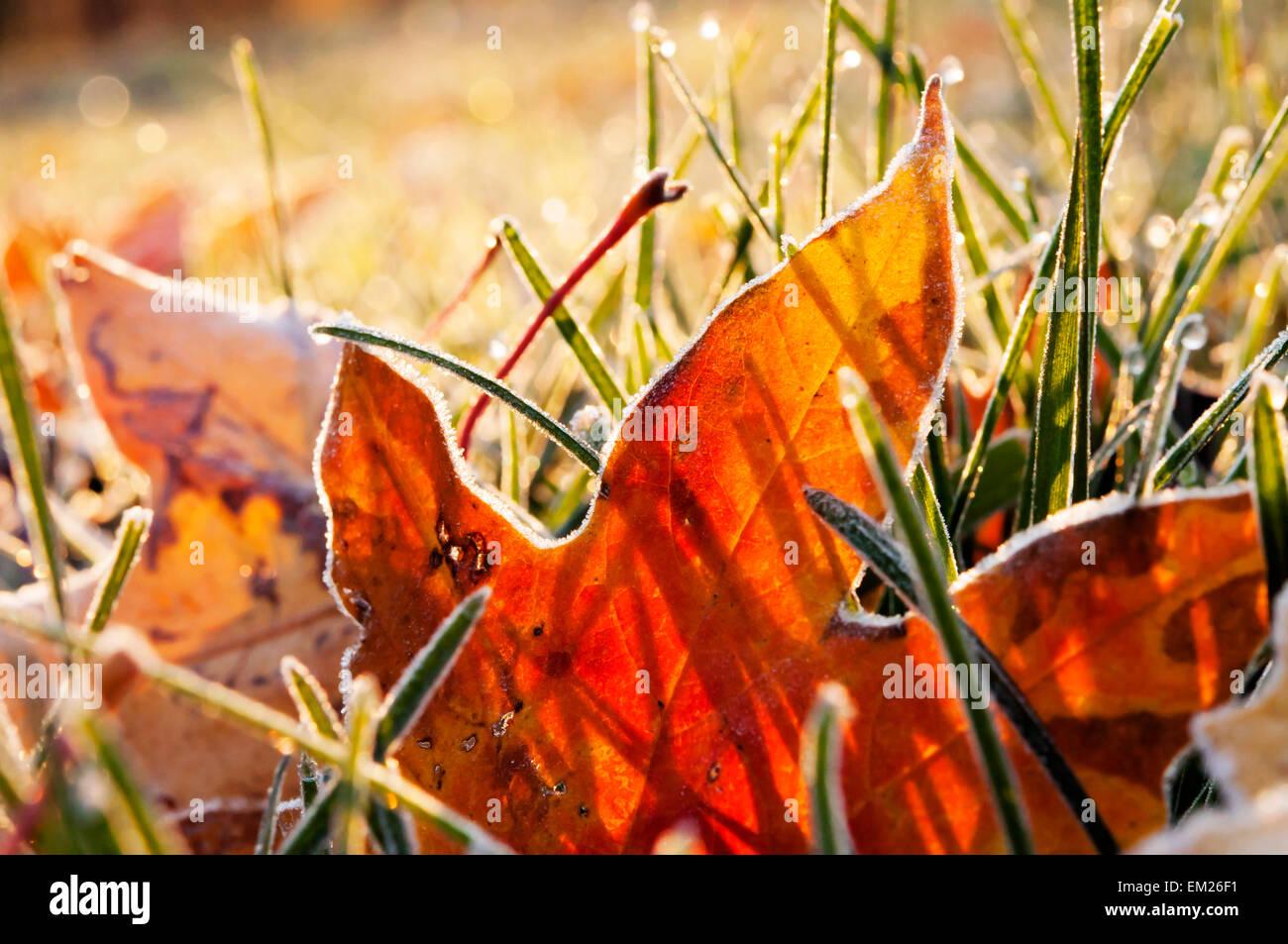Blätter Herbst Frost Stockbild