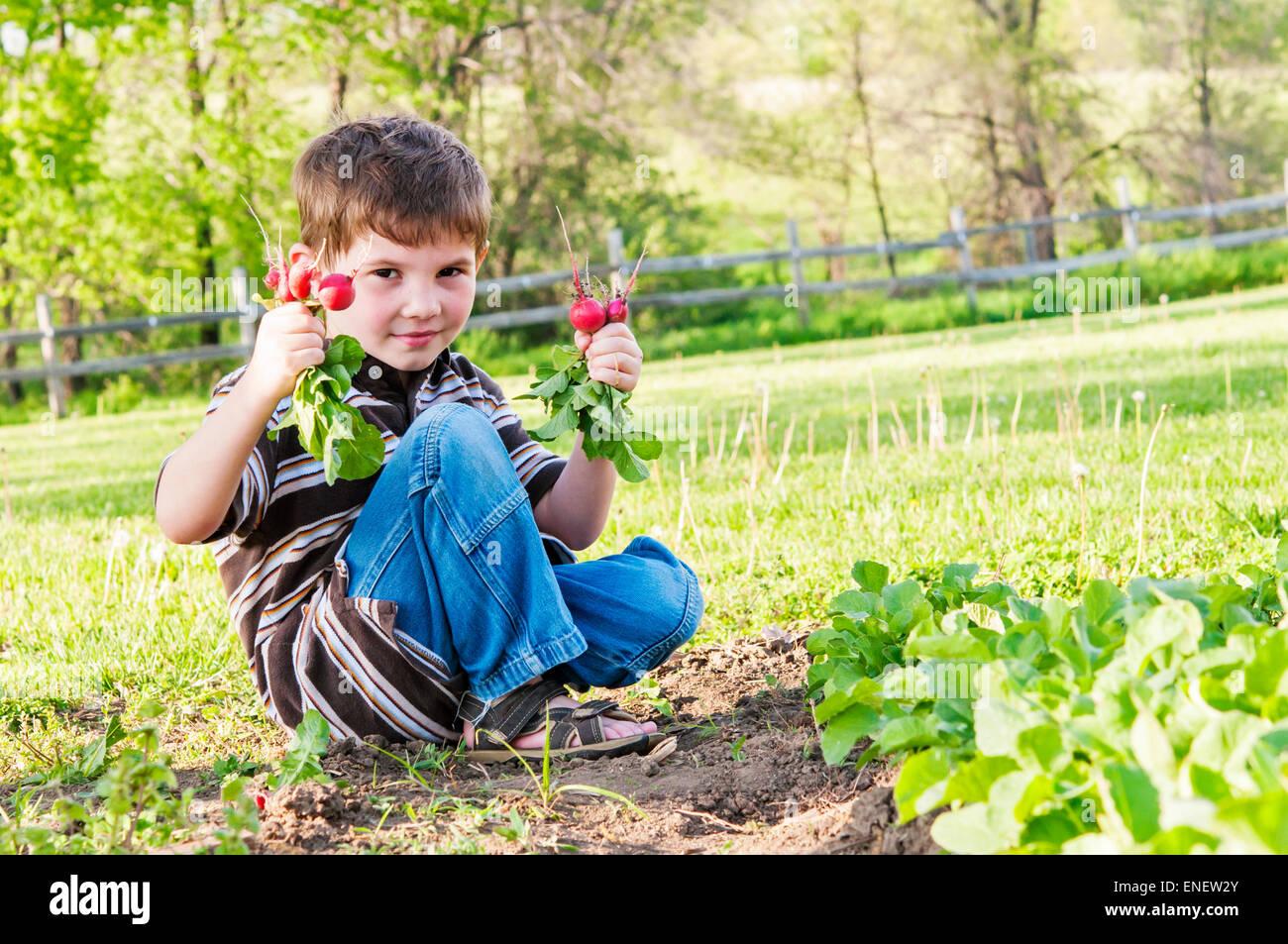Junge mit Radieschen aus Garten gezogen Stockbild