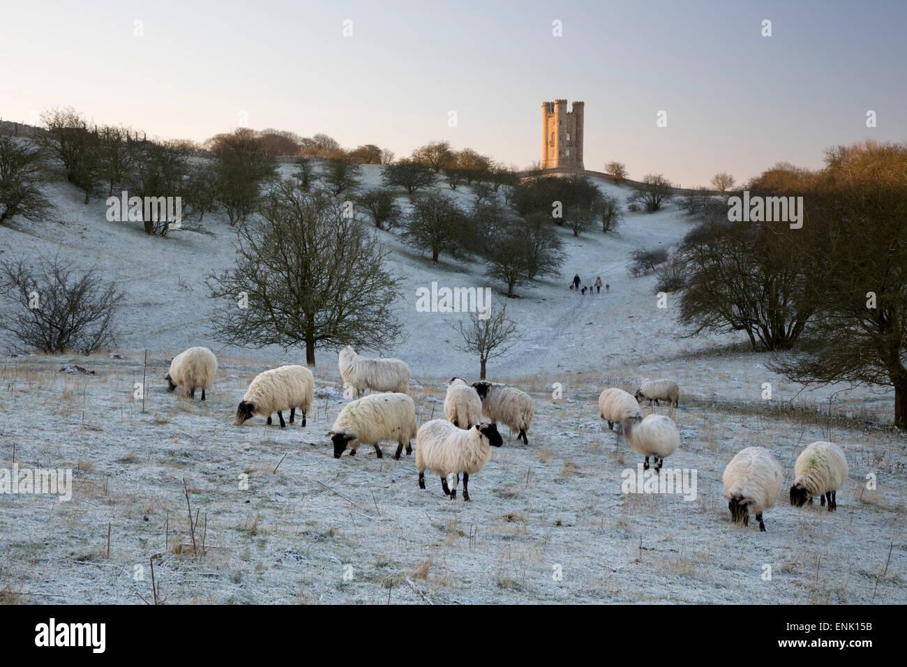 Broadway Tower und Schafe Morgen frost, Broadway, Cotswolds, Worcestershire, England, Vereinigtes Königreich, Stockbild