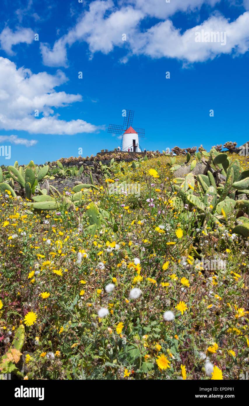 Jardin de Cactus (Kaktusgarten) auf Lanzarote, Kanarische Inseln, Spanien. Stockbild