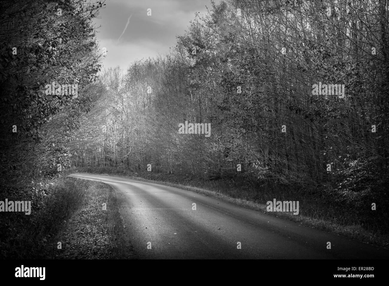 Straße Holz Bäume Indre-et-Loire Frankreich schwarz / weiß Stockbild