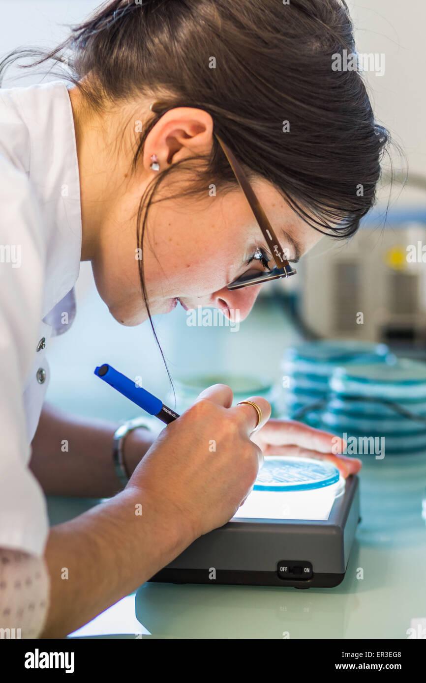 Hände halten eine Kultur-Platte, die Prüfung auf das Vorhandensein von Escherichia-coli-Bakterien durch Stockbild