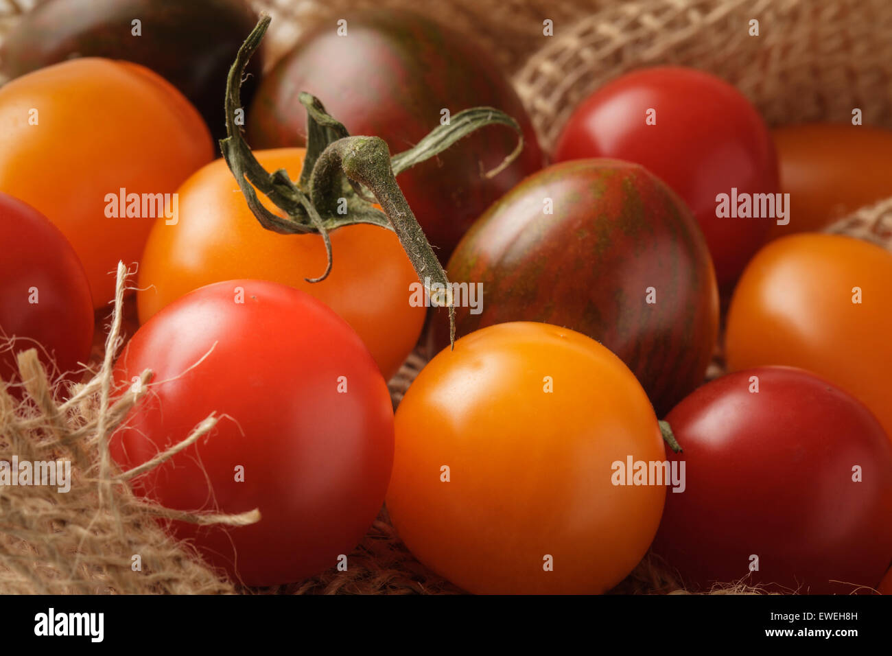 Bunte Bio Tomaten Stockbild
