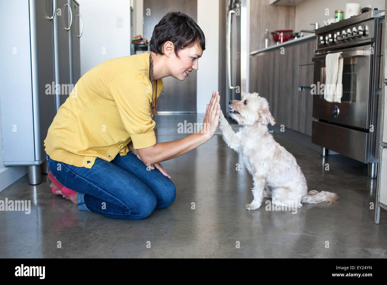 Junge Frau mit Hund ein high Five in Küche Stockbild