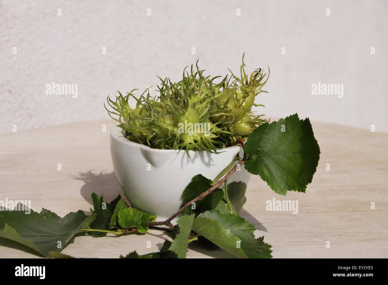Hazel Nussfrüchte in einer weißen Schüssel auf weißem Hintergrund Stockbild