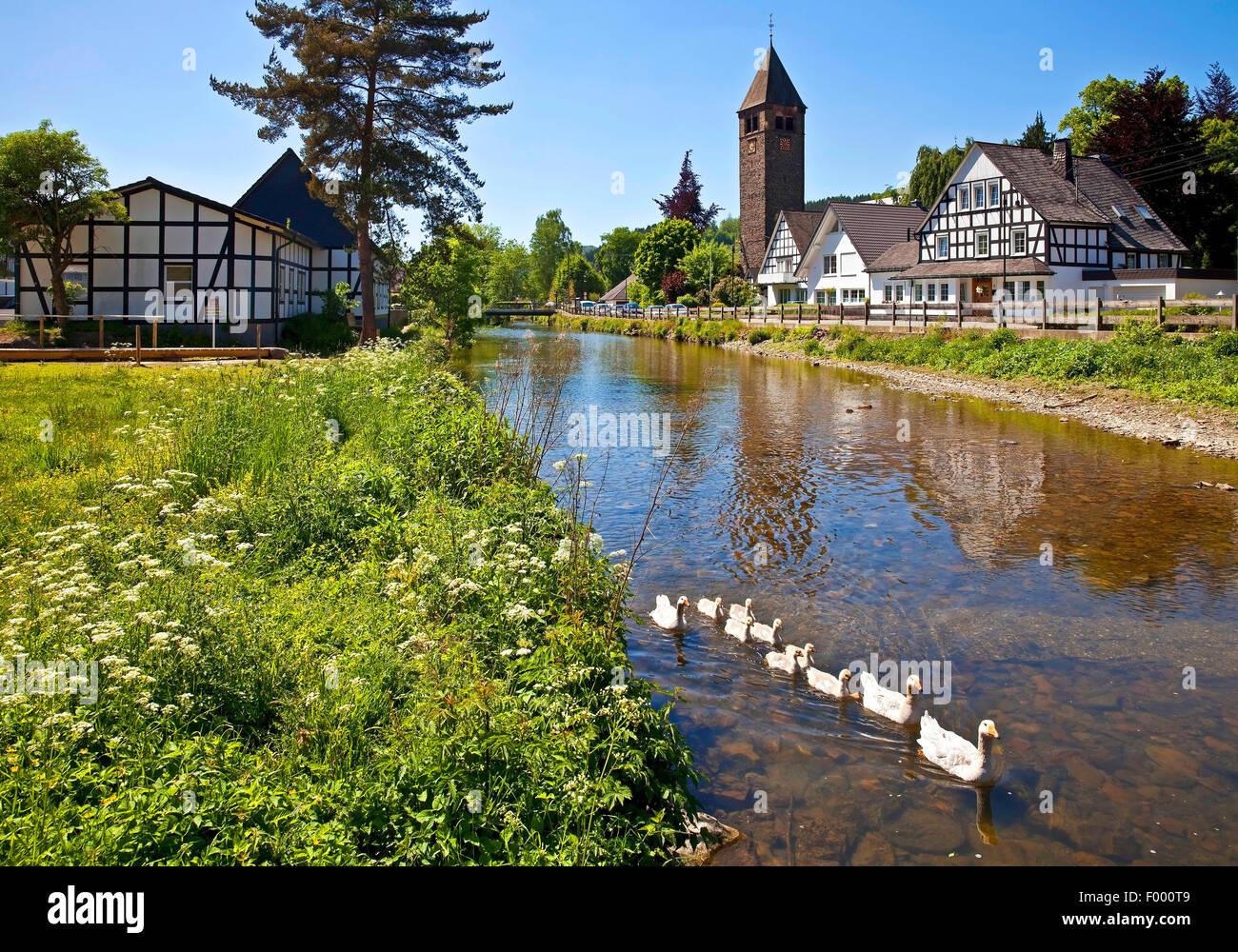 Fluss Lenne Bezirk Saalhausen, Deutschland, Nordrhein-Westfalen, Sauerland, Lennestadt Stockbild