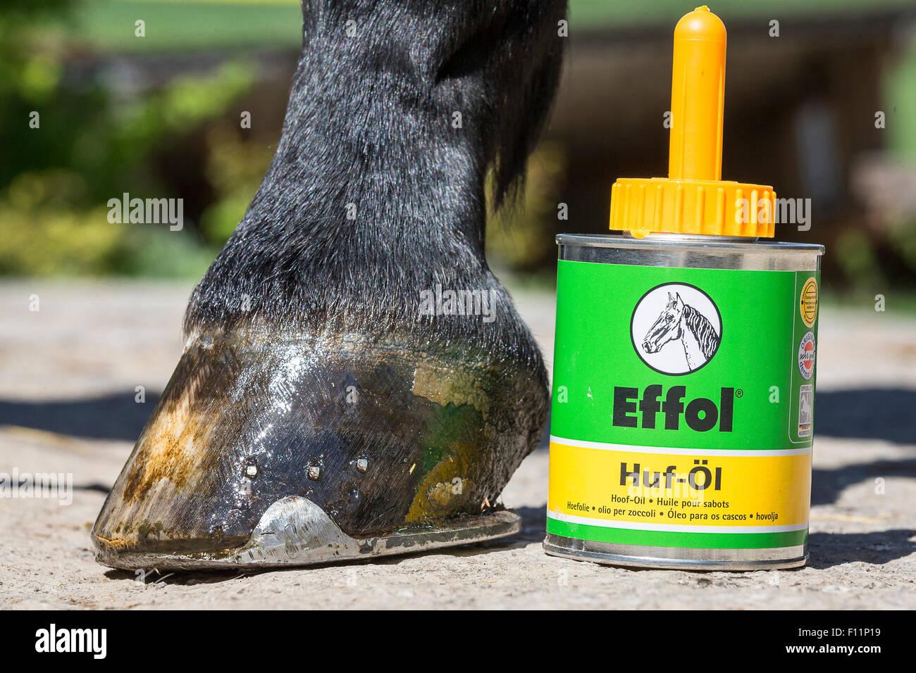 Inländische Pferd HUF frisch geölt Huföl Stockbild
