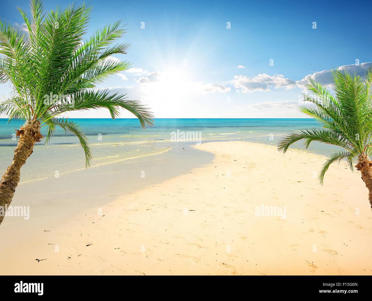 Palmen am Strand in der Nähe von Meer im sonnigen Tag Stockbild