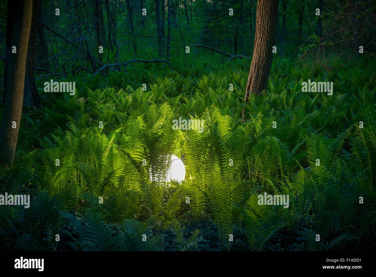 Glühende Kugel im Farn Wald Stockbild