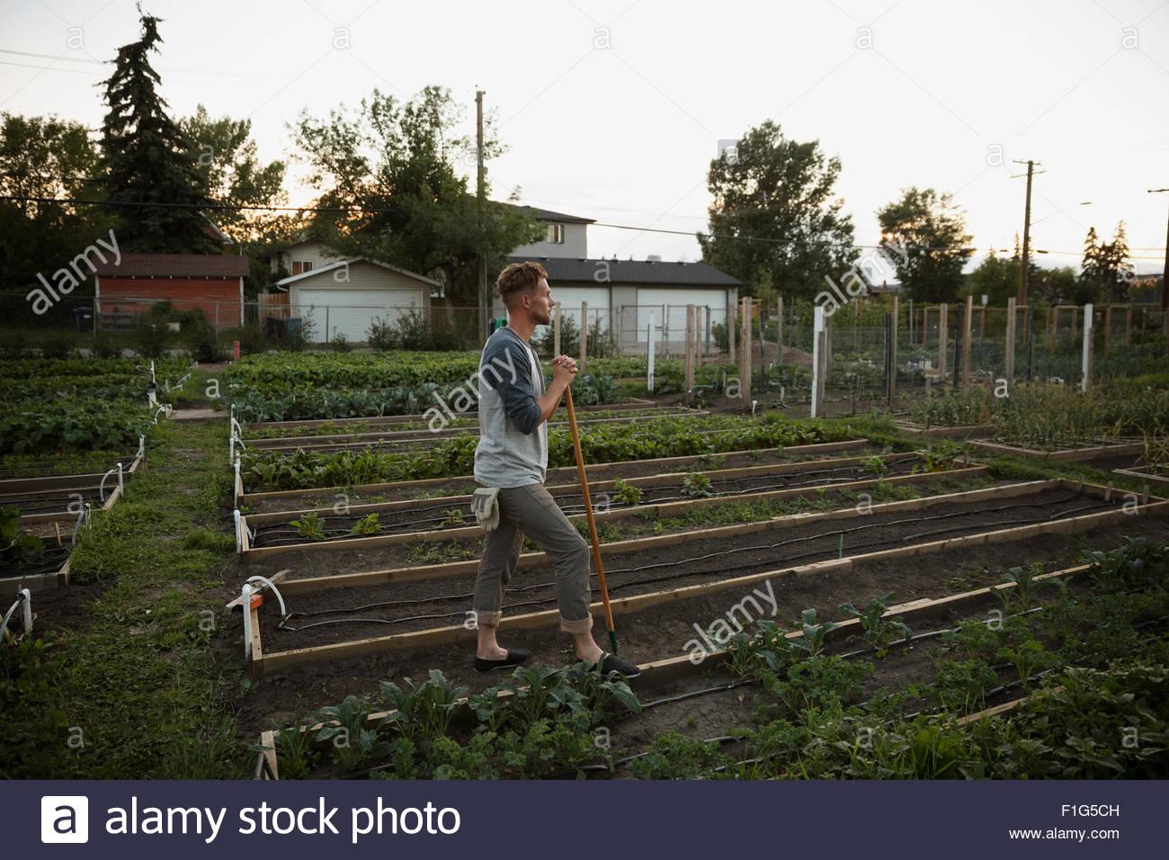 Mann, die tendenziell Gemüsegarten Stockbild