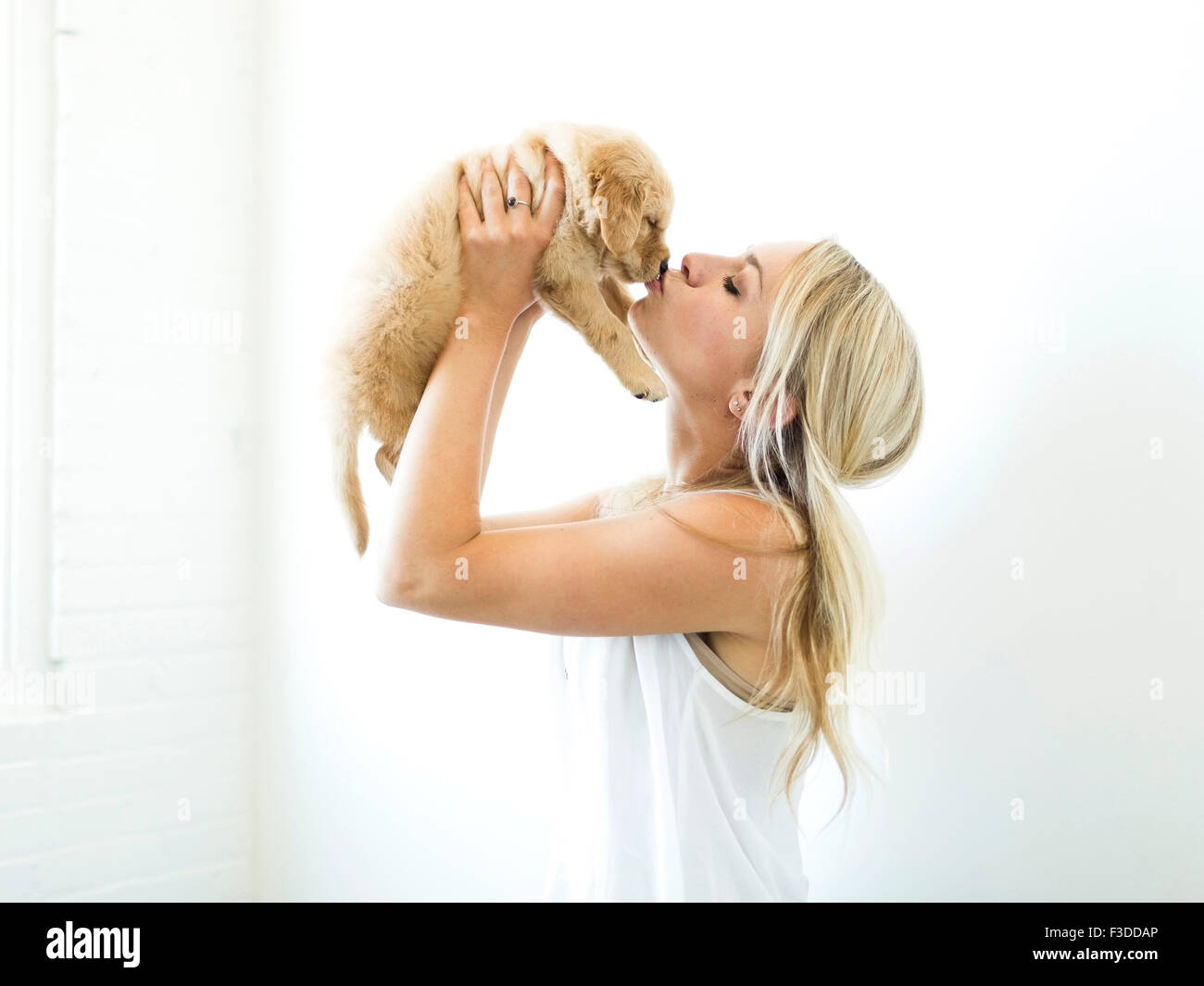 Studioaufnahme des Besitzers küssen Golden Retriever Welpen Stockbild